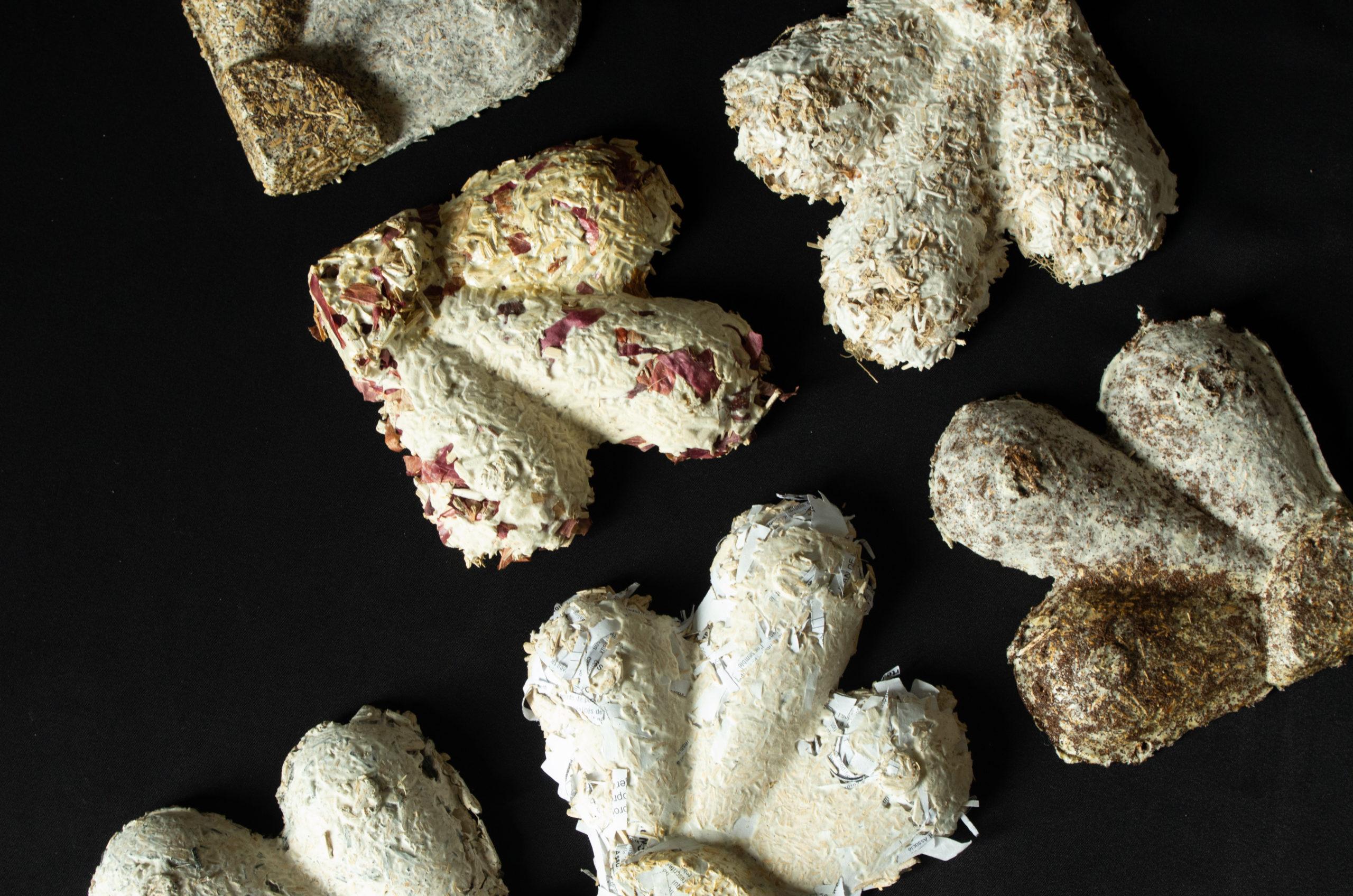 b- Mycelium - les tests matériaux